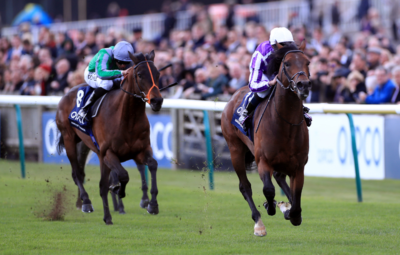 Magna Grecia too hot for Gosden?