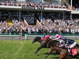 Barrosa Red fromthehorsesmouth.tips Haydock Park 6-1 winner