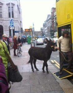 Donkey boards bus in Dublin.