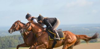 *Andrew Atkinson's fromthehorsesmouth.tips No.1 tipster of The Turf!