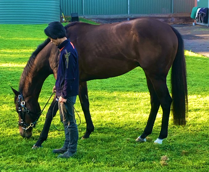 Harlem enjoys a pick of grass before his tilt at the Ladbrokes Cox Plate