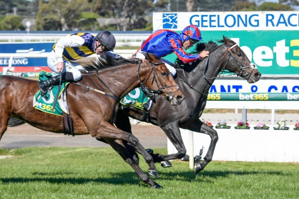 Prince Of Arran winning the Bet365 Geelong Cup. Photo: Racing Photos
