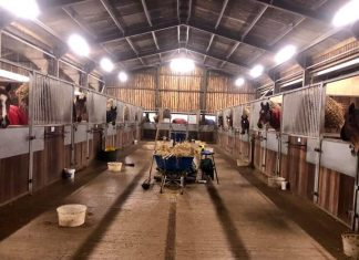Horses at Philip Kirby, Green Oaks Farm racing stables, waiting for their teas. Photo: Courtesy Philip Kirby.