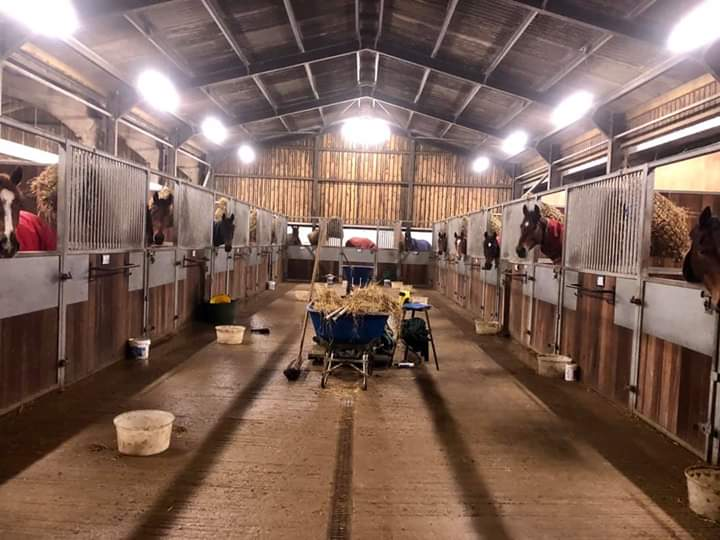 Horses at Philip Kirby, Green Oaks Farm racing stables, waiting for their teas. Photo: Courtesy Philip Kirby.