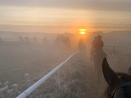 Frosty morning on the gallops