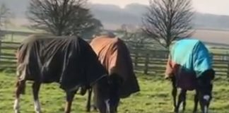 Little Bruce, Bertie Blake and Wemyss Point having fun at Green Oaks. Video: Courtesy Philip Kirby racing stables.