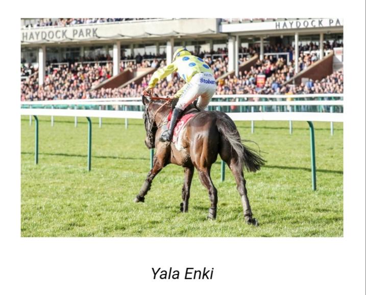 Each way selection Yala Enki